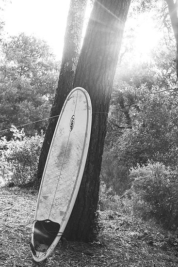 Surftrip, 2019