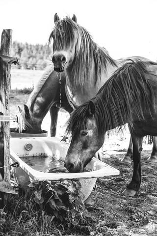 cheval cavalier val d oise oise tiffany