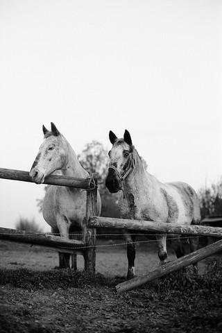 photographe equestre val d oise shooting
