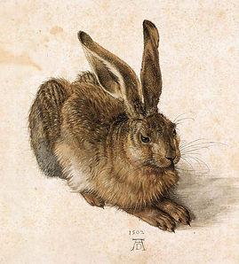 Albrecht-Durer-Young-Hare.JPG