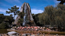 Zoo de la Palmyre ( à 45 mins )
