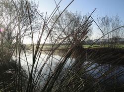 Le canal de l'Arnoult