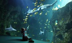 Aquarium La Rochelle ( à  50 mins )