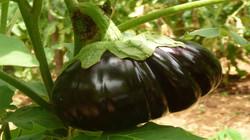 zanzibar hotel resort bio-food