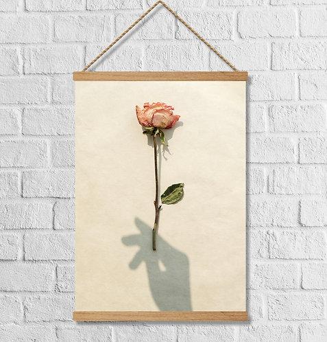 "Cuadro Lienzo ""rose"""