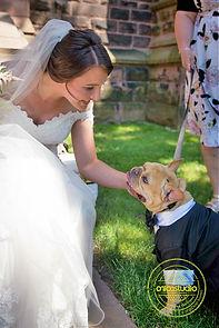 WeddingDog6.jpg