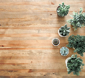 above-ground-photo-of-succulent-plants-o