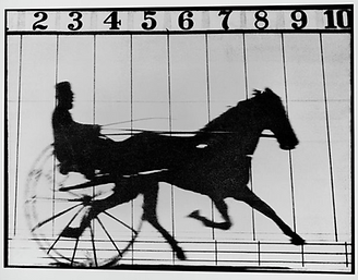 Muybridge Horse Trottingb.png