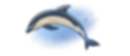 dolphin PNG.png