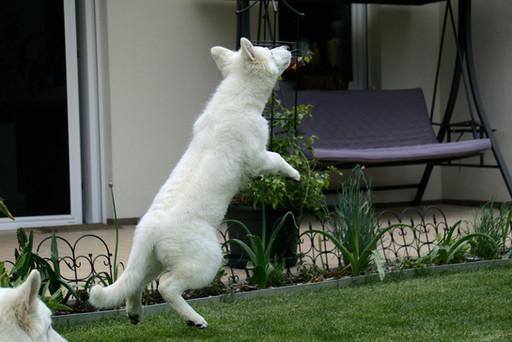 Nemesis vom weißen Birkenstolz