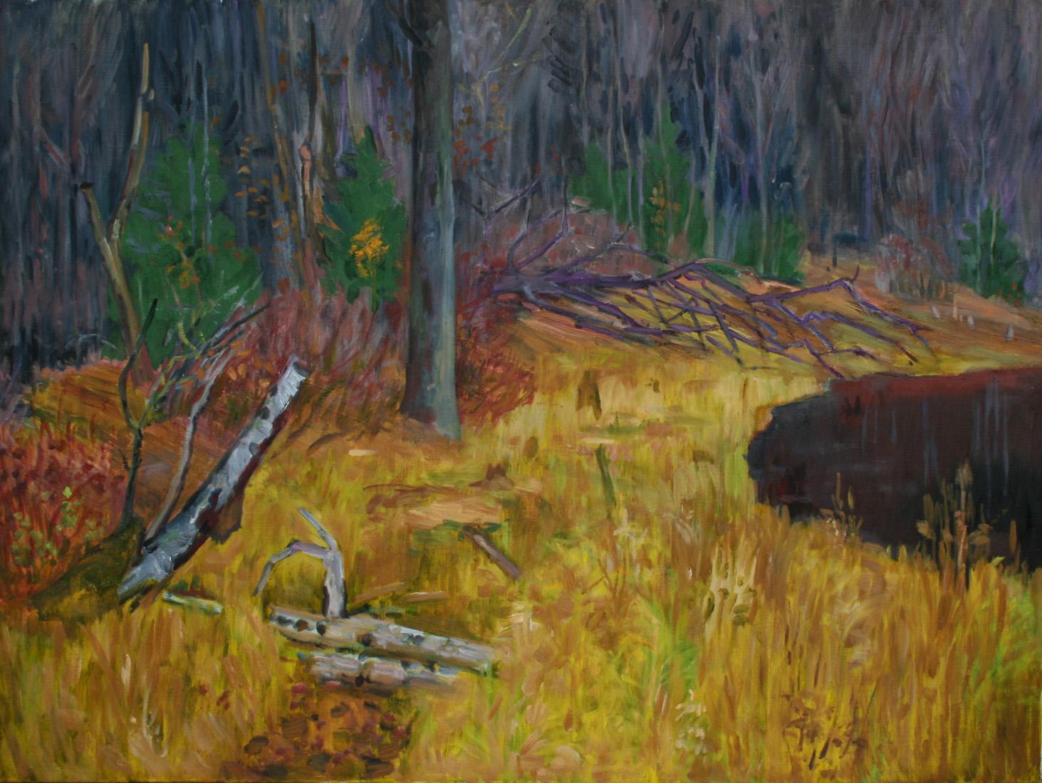 Swamp in November