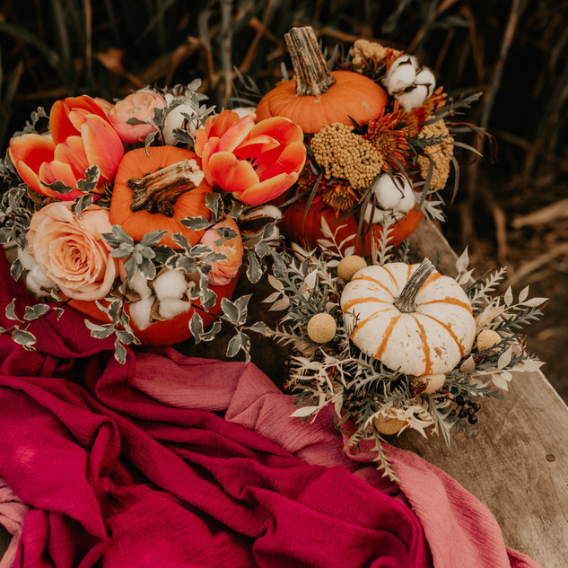 Corn Field Styled Shoot Cover