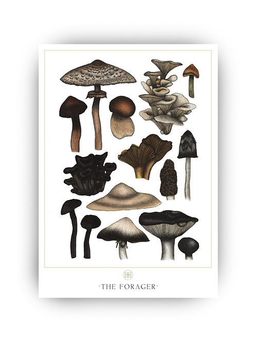 'The Forager' Fine Art Print