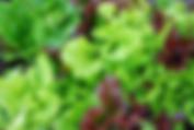 Farm Fresh Florals & Leis