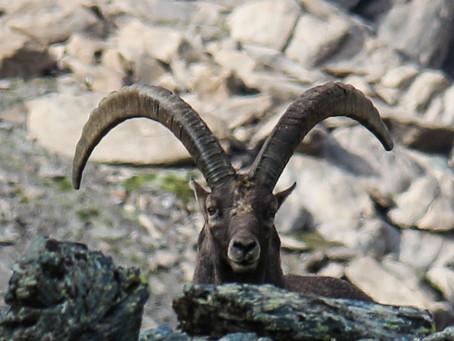 7 jours de jeûne en plein coeur des montagnes de l'Ubaye
