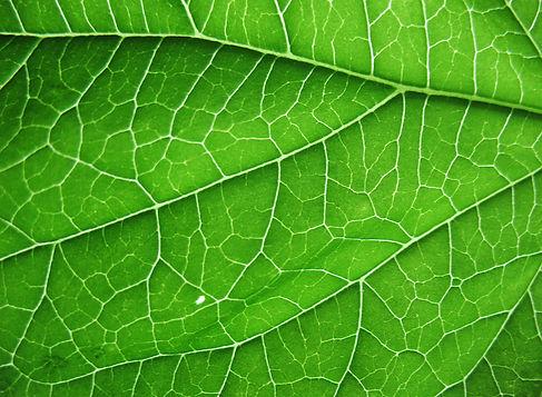 plant4future abot