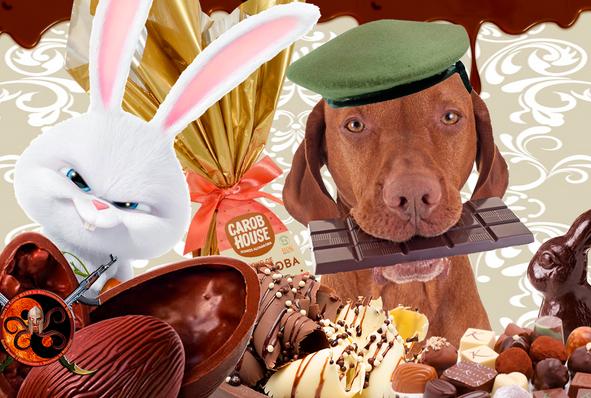 Na Páscoa cuidado com os Pets