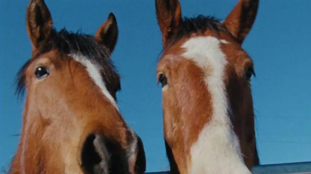 DAM: Horsemanship