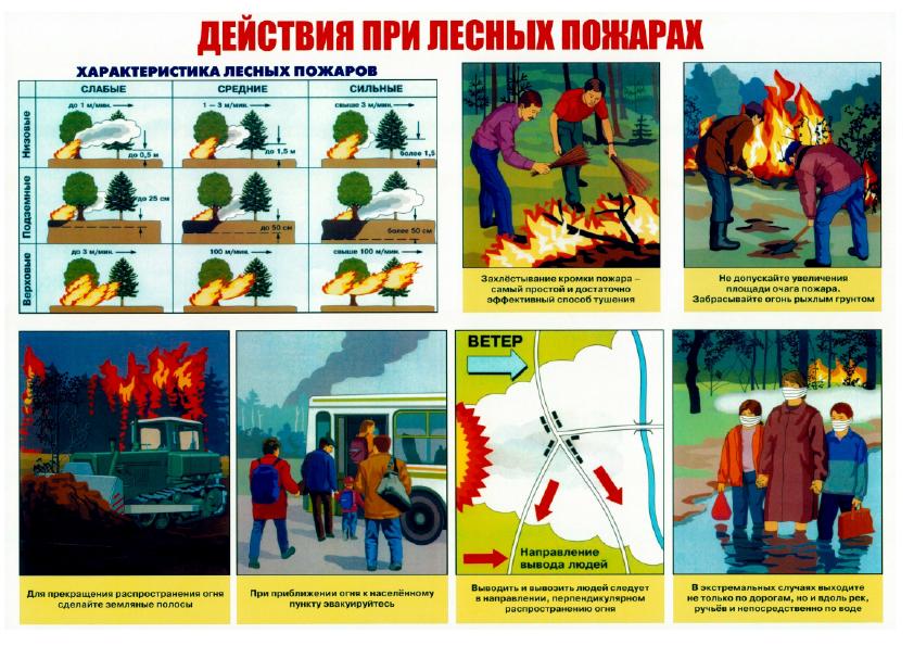 Плакаты_13.png
