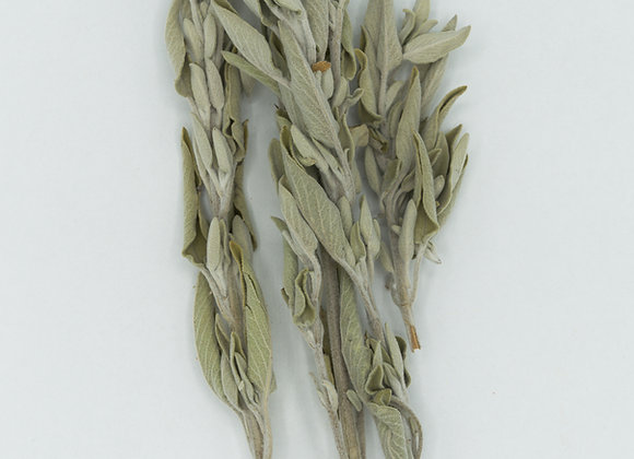 Greek Mountain Sage