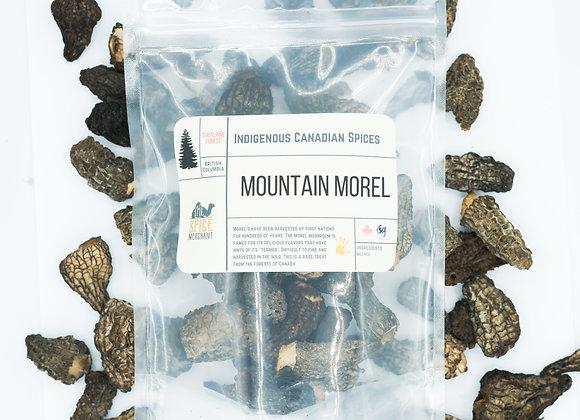 Mountain Morel