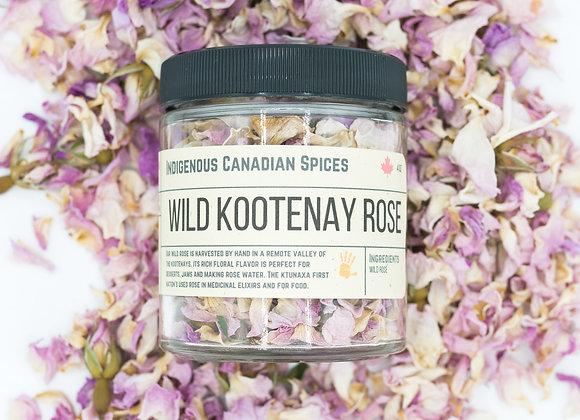 Wild Kootenay Rose