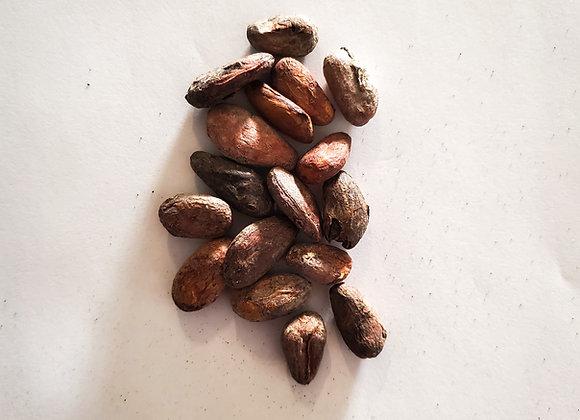 Raw Cacao Beans - Venezuela