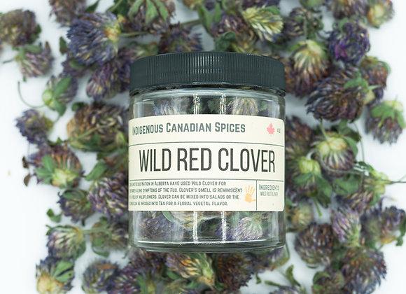 Wild Red Clover