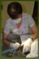Laurel_Cleaning_Dogs_Teeth_Pic.jpg