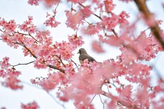 春を覗き込み.JPG