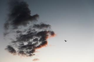 1. 黎明.jpg