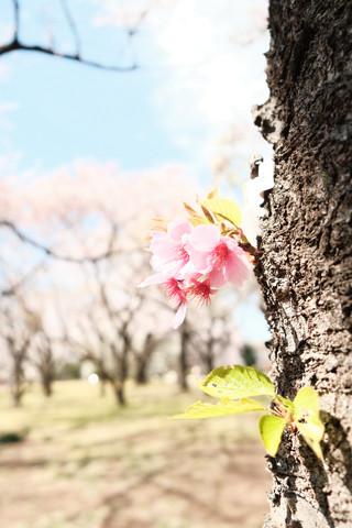 春になったら.JPG