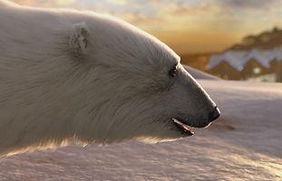 bear cu.jpg