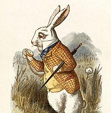 Yoga Wonderland - Down the Rabbit Hole Podcasts