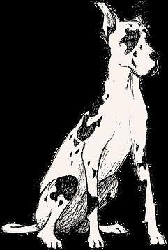 Mozi Great Dane Animated Black White Sitting