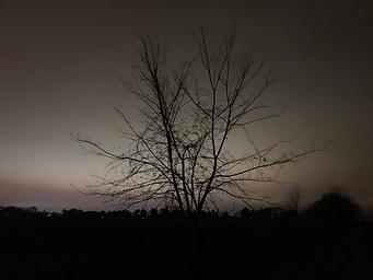 Dark Lit Trees Night Sky