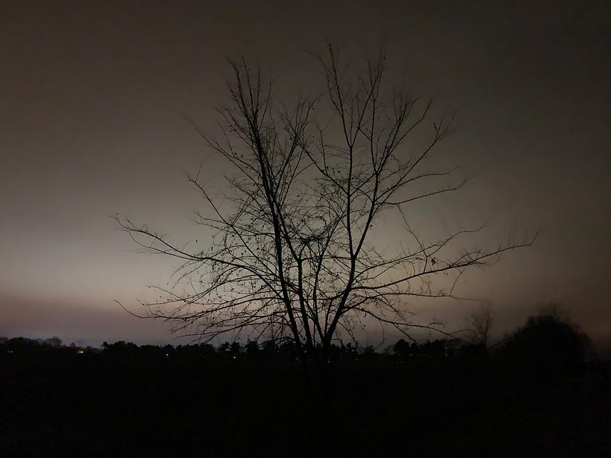 tree-2_IMG_4640.png