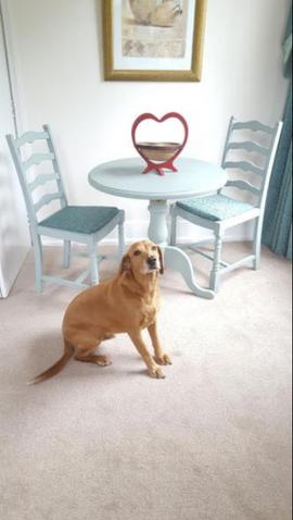 Dog Friendly Home