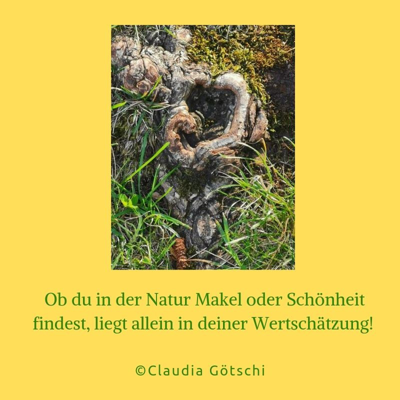 Die Schönheit der Natur | The beauty of nature