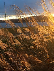 winter sun on grass.JPG