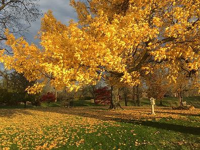 IMG_1913 small yellow.JPG