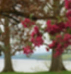 spring river.jpg