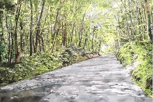 軽井沢の新緑 木漏れ日 美しい風景画