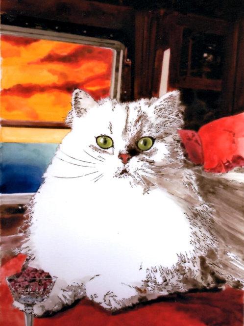 ゴージャスな白猫 主役は猫