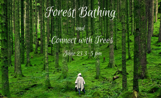 It is a thrilling journey to set forth in the forest
