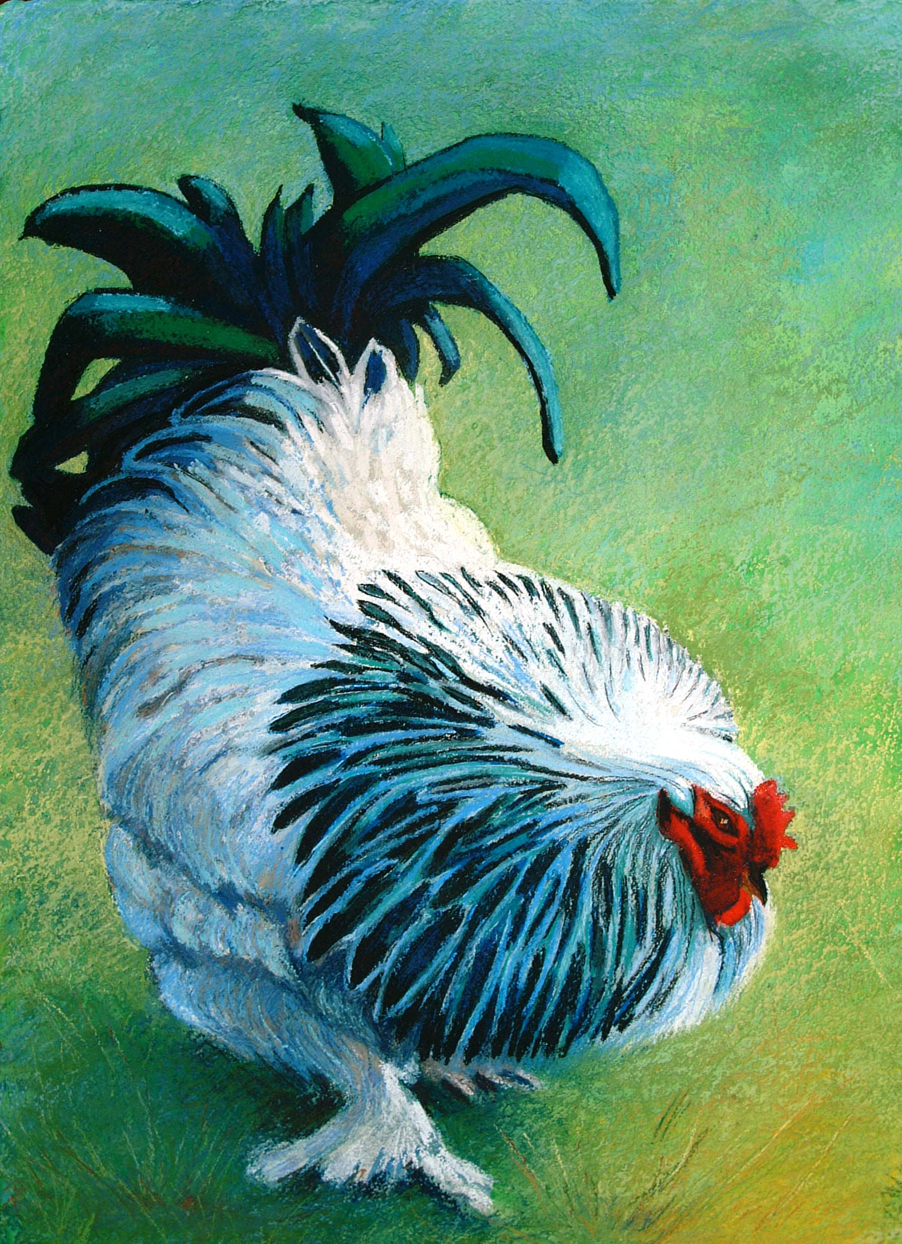 Blue Cockerel