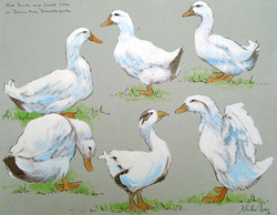Five Ducks and a Goose