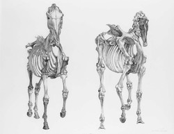 Two Skeletons from Stubbs