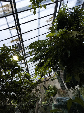 Botanischer_Garten_Münster.JPG