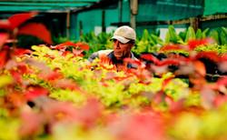 Jean-Michel Cousteau Resort's Organic Garden